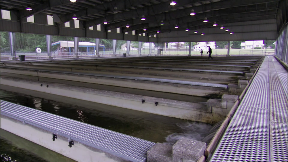 Rows of metal fish tanks at a hatchery.