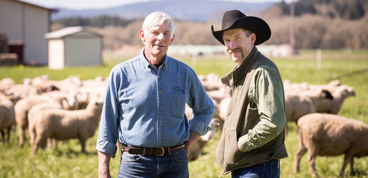 two men, one in a black cowboy hat, stand on a ranch on a sunny day in front of a herd of sheep