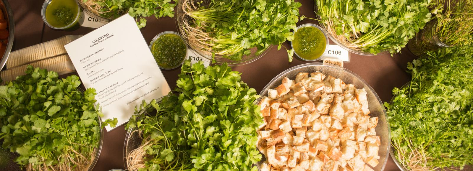 cilantro varieties and a bowl of bread cubes