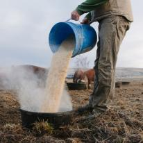 A man pours grain feed into a blue bucket