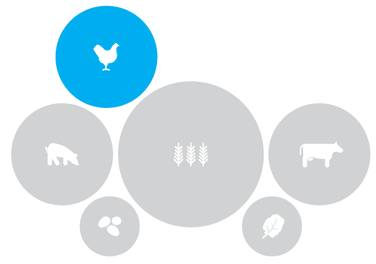 illustration of food types with chicken highlighted