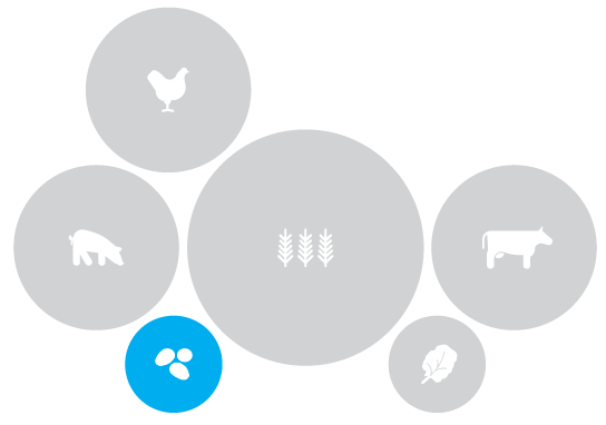illustration of food types with storage crops highlighted
