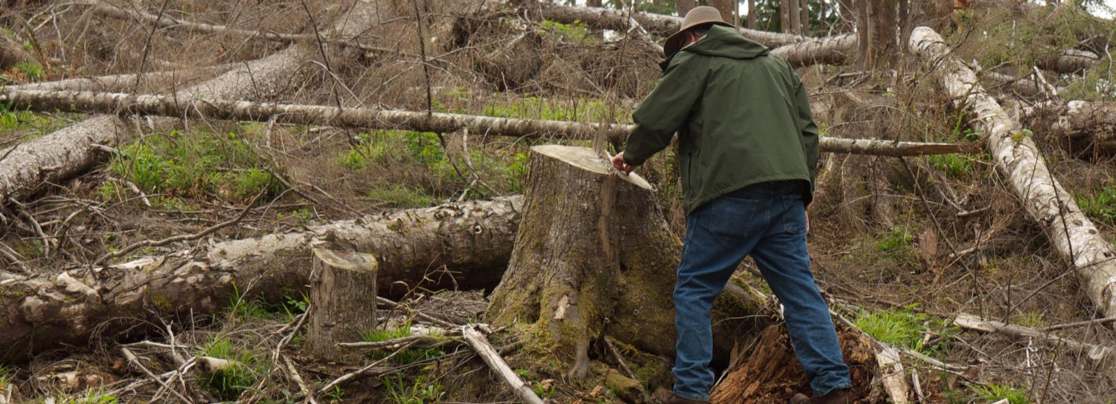 A man in a green coat and tan felt hat stands next to a tall stump and uses his finger to count the tree rings amidst downed logs