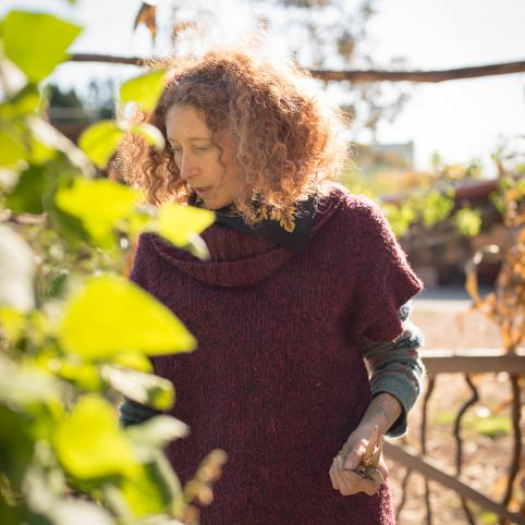 Suzanne Stone, wearing a burgundy sweater, her hair red, curly and loose, walks along a trellised row of beans with several in her hand. She is in the midground, the first bean plant is unfocused in the foreground.
