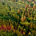 An aerial view of a large forest