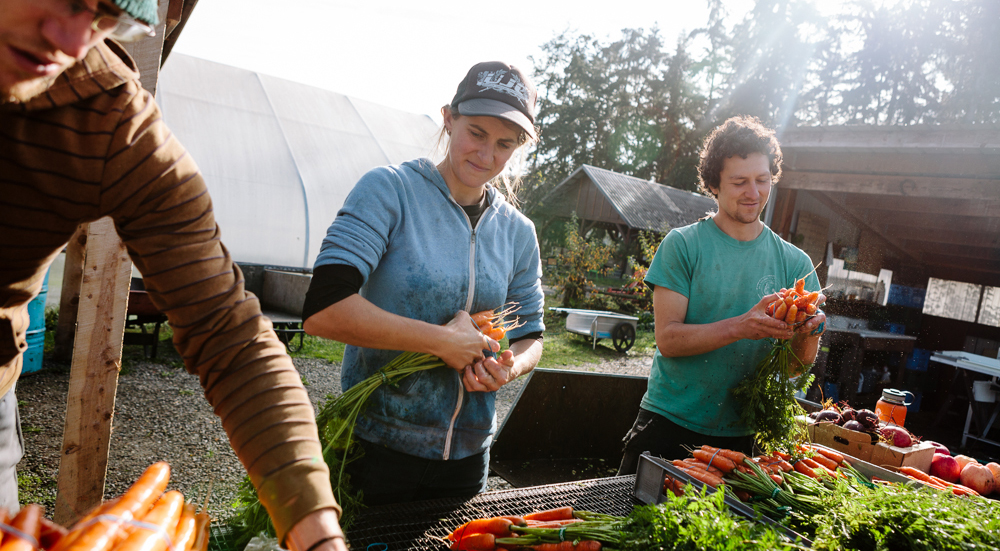 Woman in blue shirt and blue baseball cap cleans bright orange carrots.