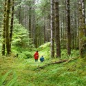Forest-planner_main image