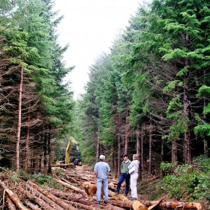 Spencer Beebe and two others standing on felled logs in a forest