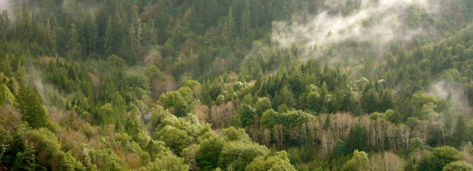 aerial view of a densely forested area with a small creek running through