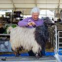 Older woman with white hair shears a black and white goat with long shaggy hair.