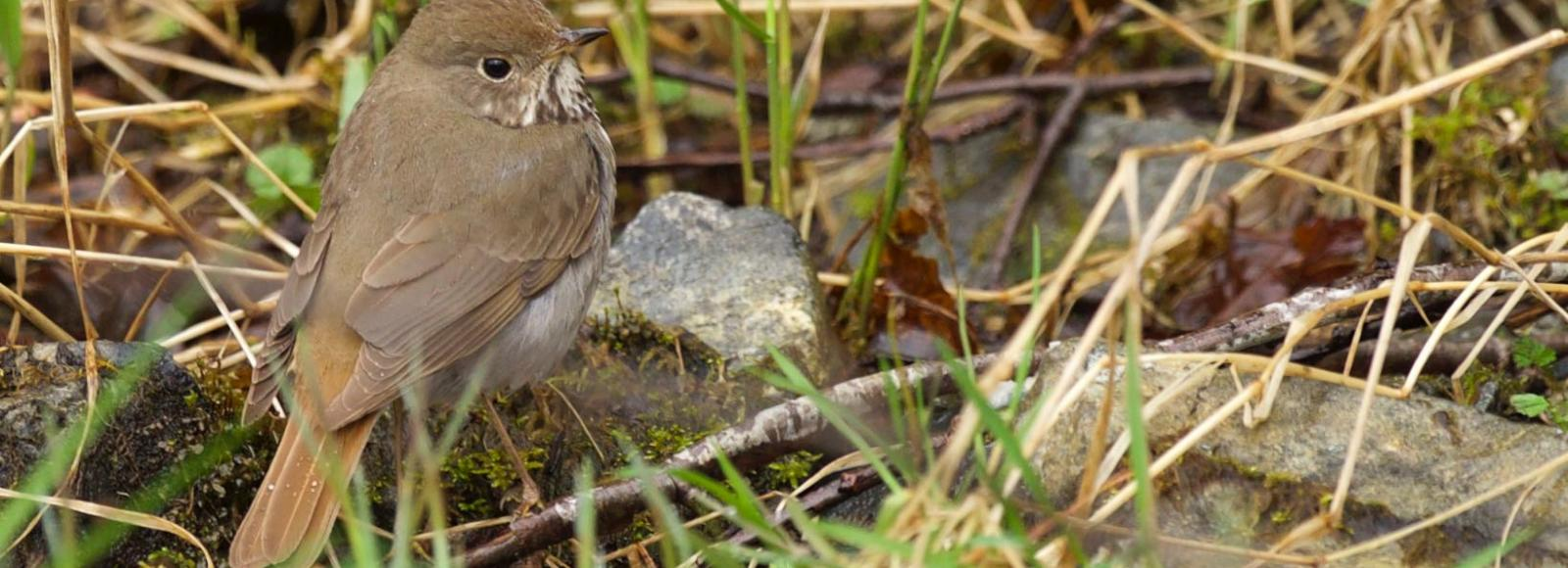 tiny brown bird in long green grasses