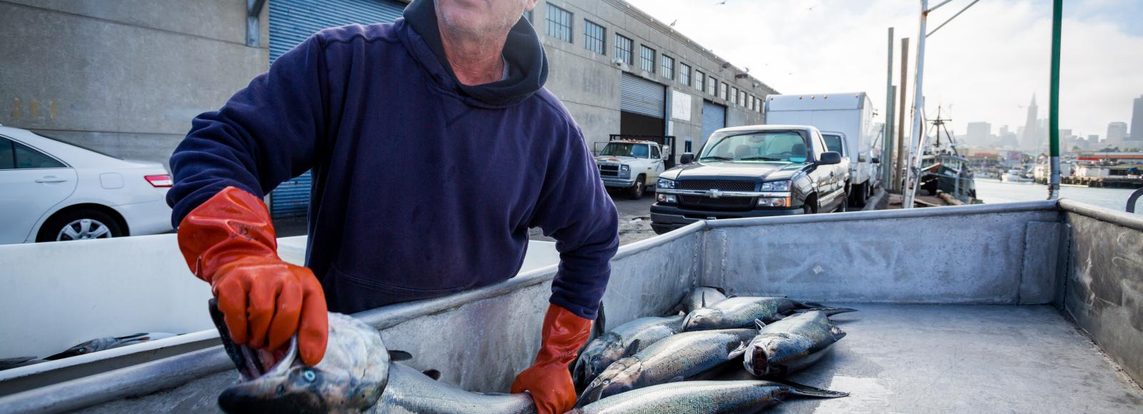 Fisherman holds fish in preparation to be transported to local homes and restaurants.
