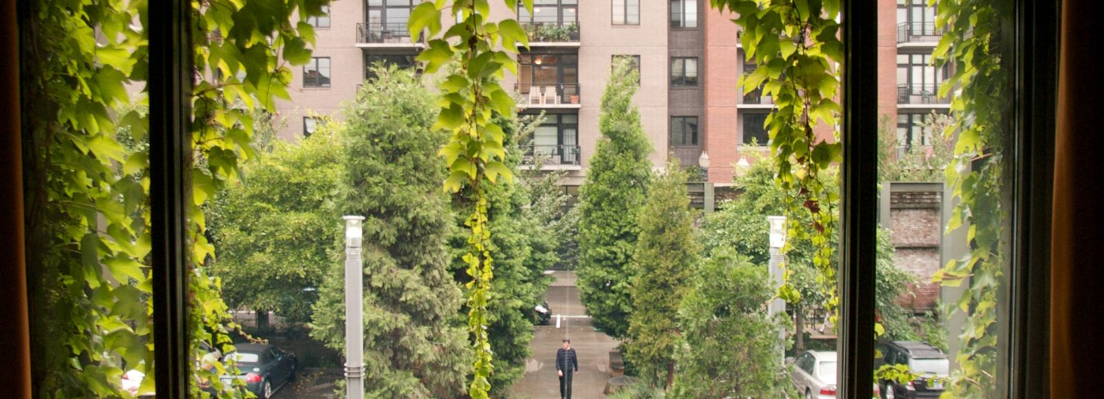 Looking out the window, lots of greenery in the city, Ecotrust building
