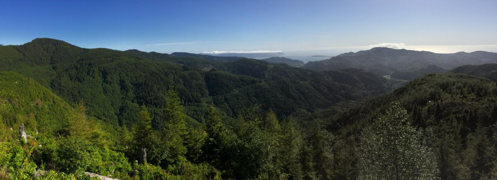 Panorama of coastal forest, sea in background.