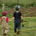 Two children walking towards a lettuce patch.