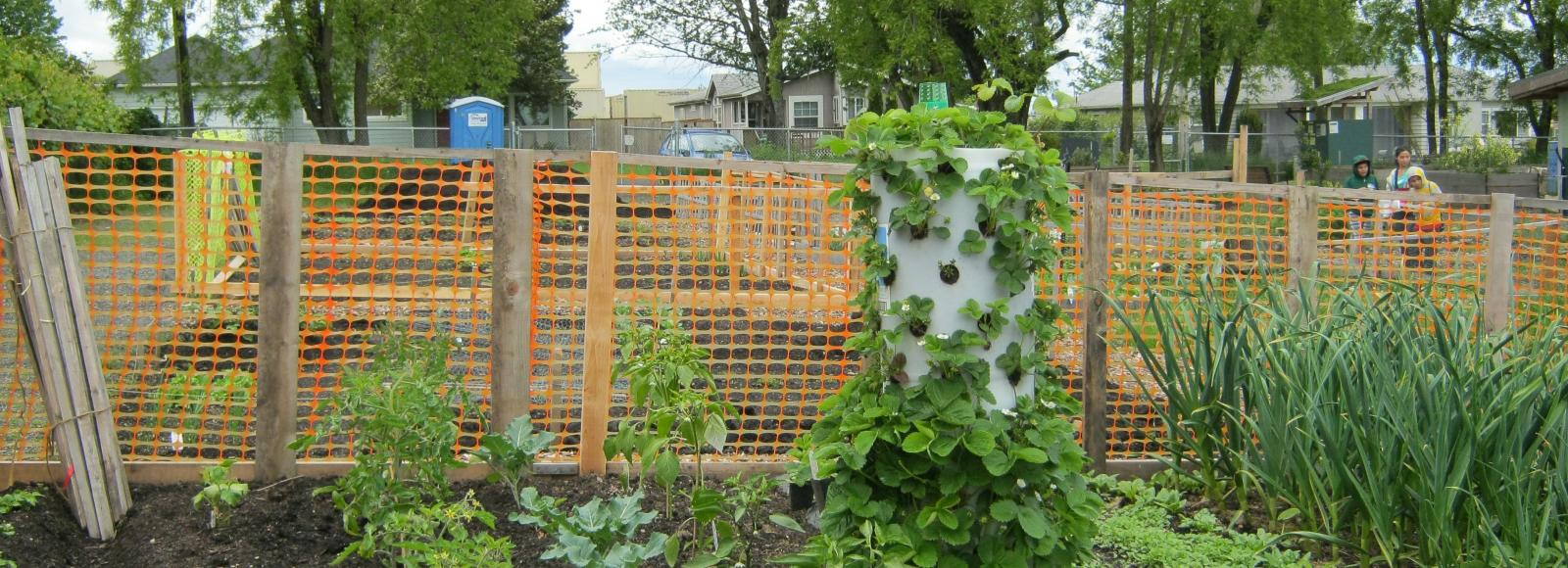 A community garden in the Cully neighborhood in north Portland.