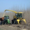 Two tractors harvesting crops for biofuel production
