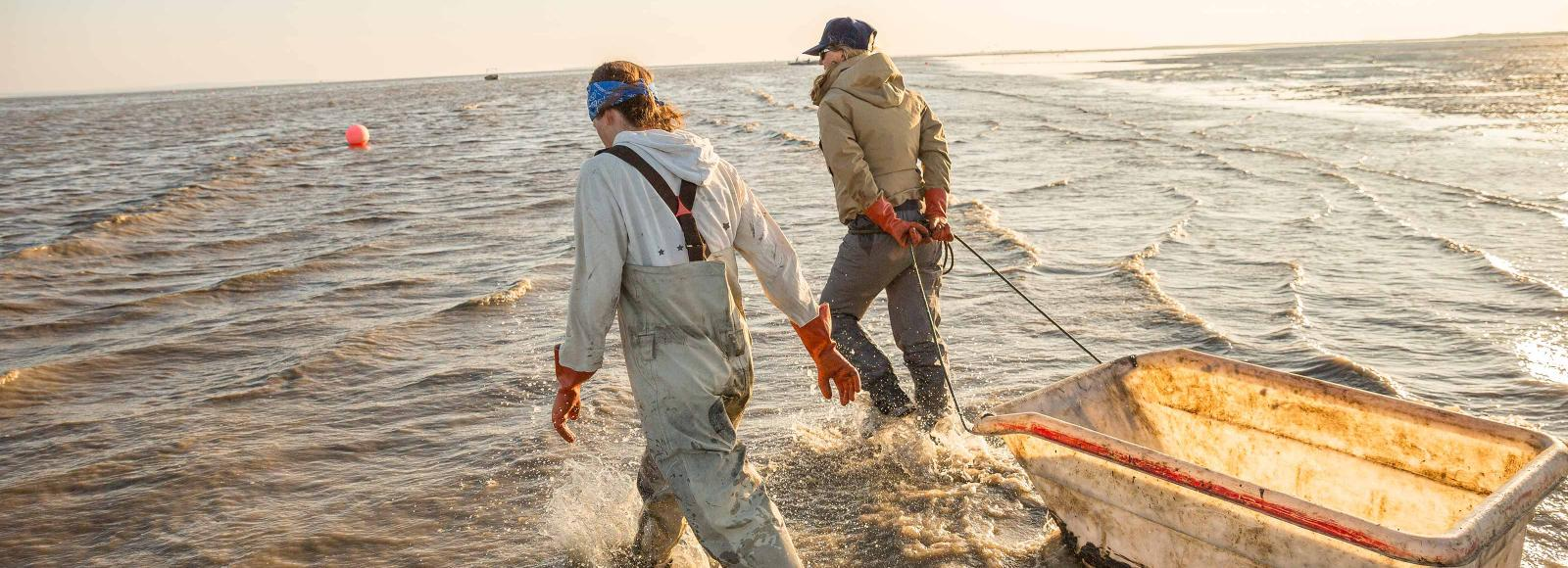 Two women fisherman haul a net through shin-deep water of Bristol Bay.