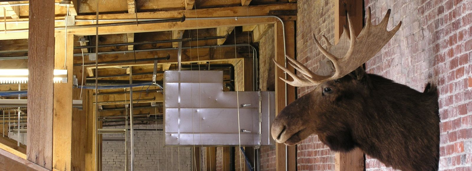 Moose mounted on the wall in the Ecotrust building, Natural Capital Center