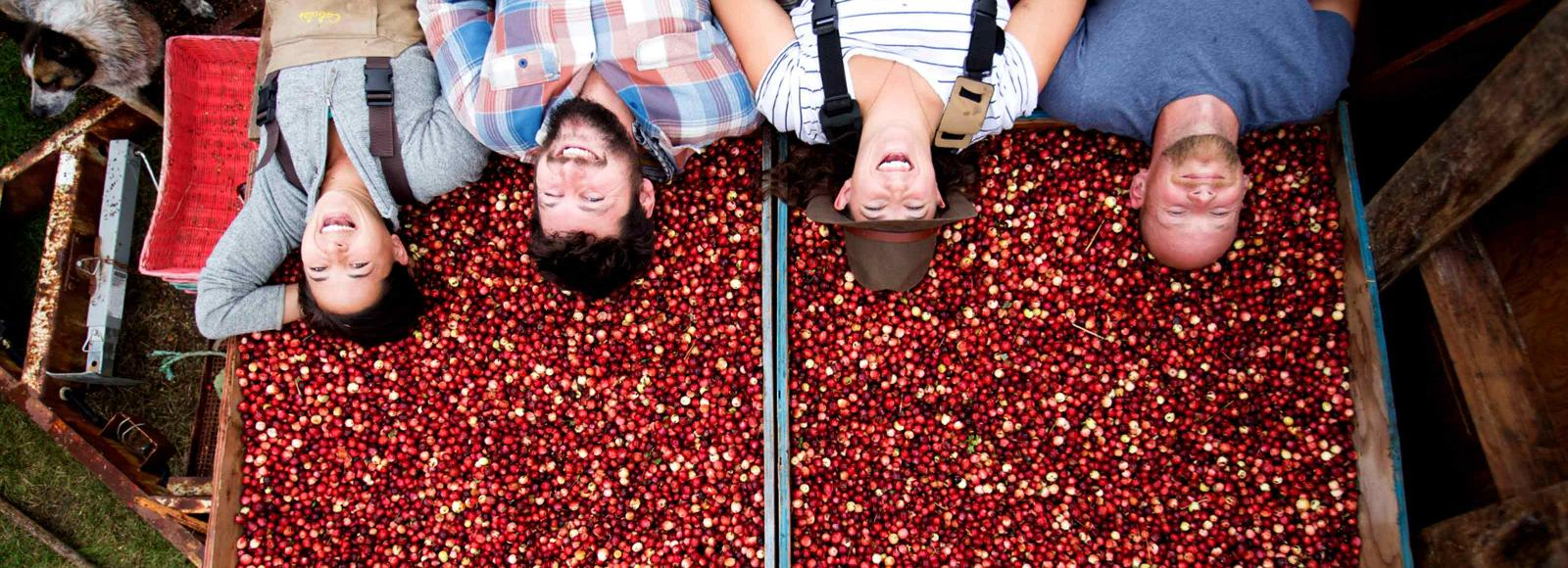 four people laughing lying down on top of colorful red cranberry harvest