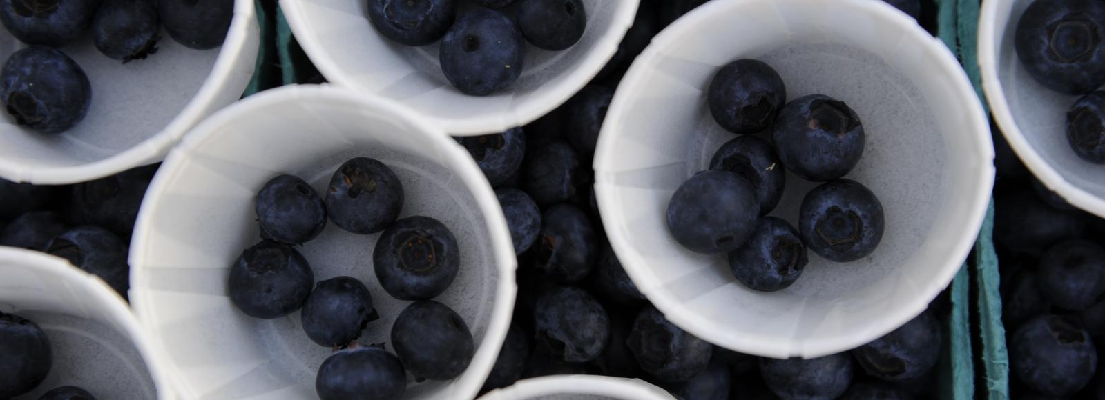 blueberries in individual cups