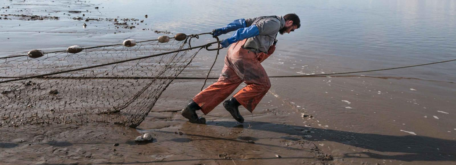 man in waders pulling a fishing net across a beach