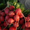 bunches of red radishes piled up on newspaper