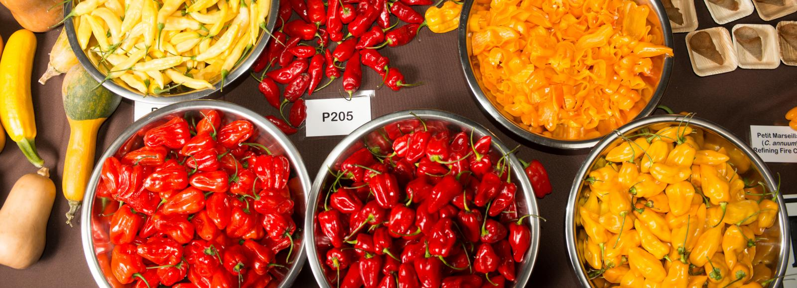 Sweet habanero varieties in bowls, ranging in color from deep red to orange to yellow