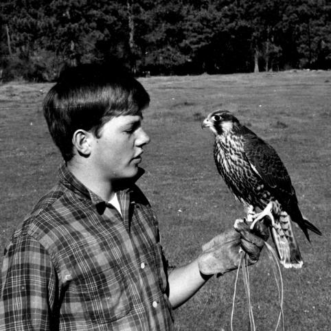 A black and white photo shows a young Spencer Beebe looking directly at a falcon that sits perched on his gloved hand