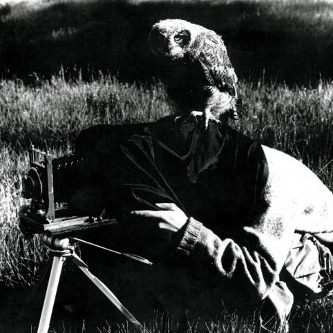 In a black and white photo, an owl staring directly at the camera sits on top of Spencer Beebe's head. Spencer is crouched in a field with the black cloth of an old camera covering his head while he takes photos