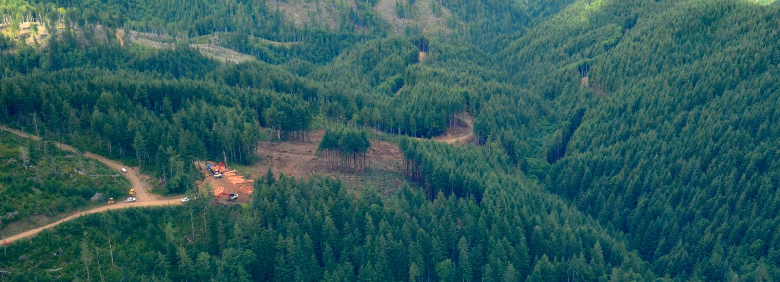 An aerial view of a small area of trees that has been harvested.