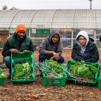 A middle-aged man and two younger men squat on the ground, each with a green plastic crate held in front of them to show the green produce in each one.