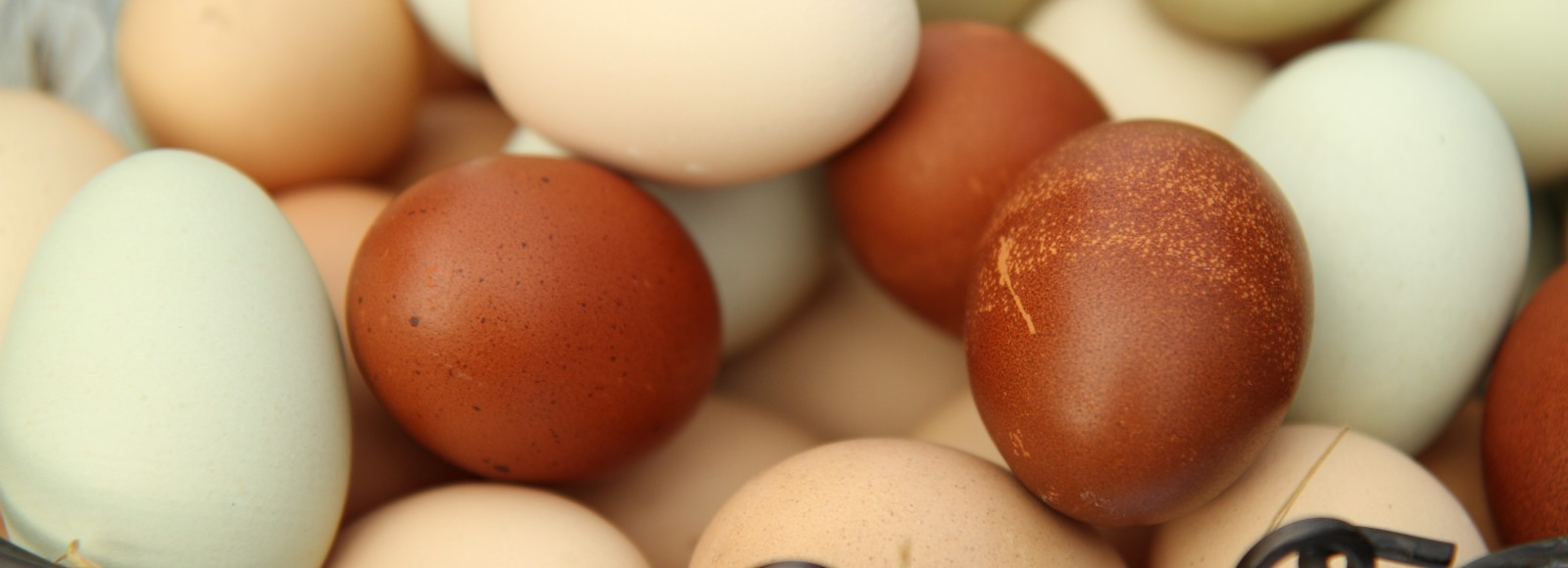 a close up of multi-colored eggs brown, tan, and green, in a black wire basket