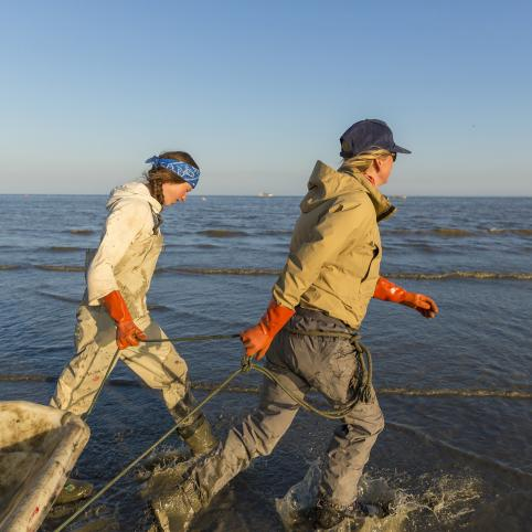 Two women wearing thick work gloves and waders pulling a fishing net along a beach toward the open water.