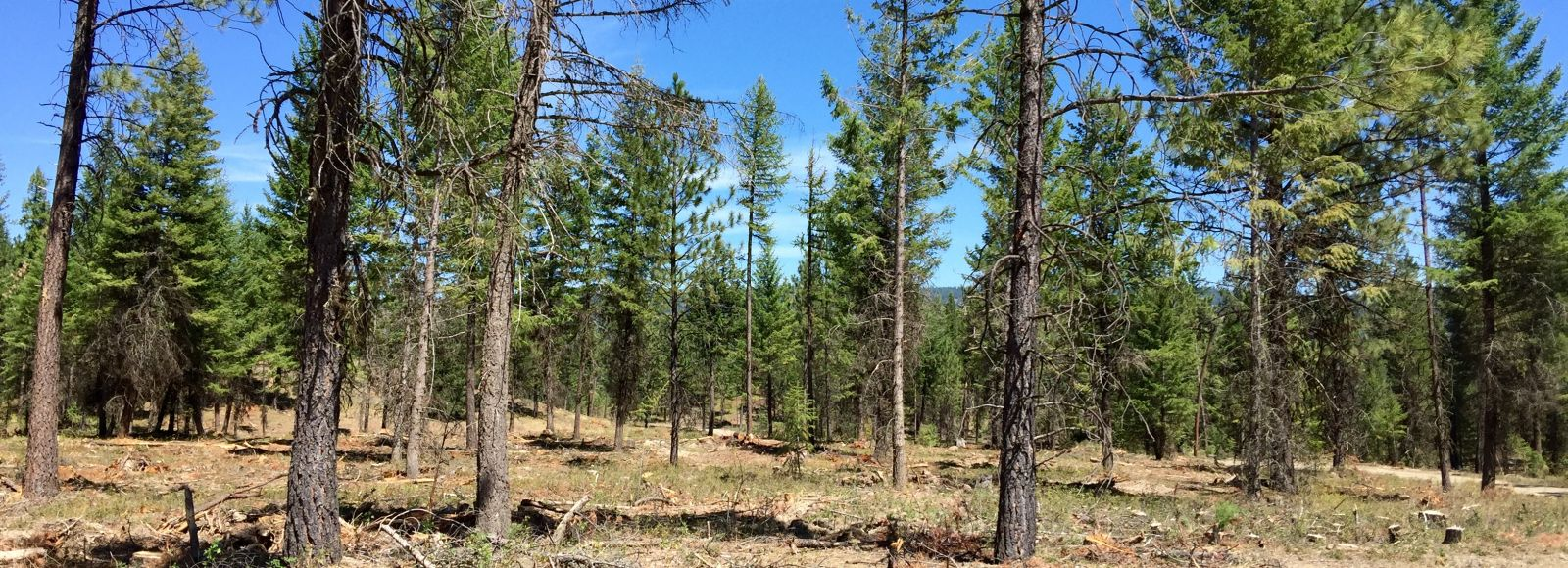 dry looking forest with a bright blue sky