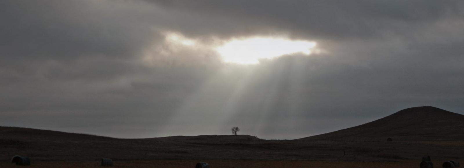 sunshine breaks through the clouds and alights one tree on the great plains