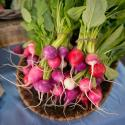 Basket of red and purple radishes