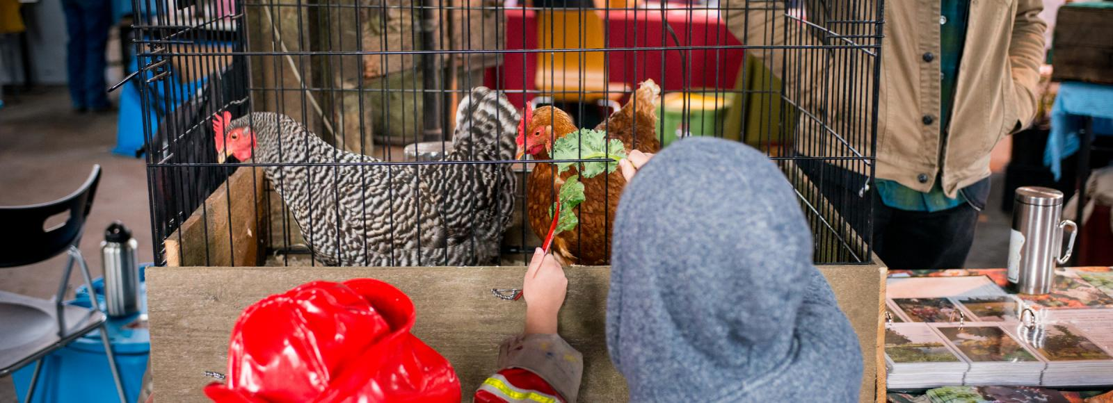 Two kids feed chard and kale to two chickens.