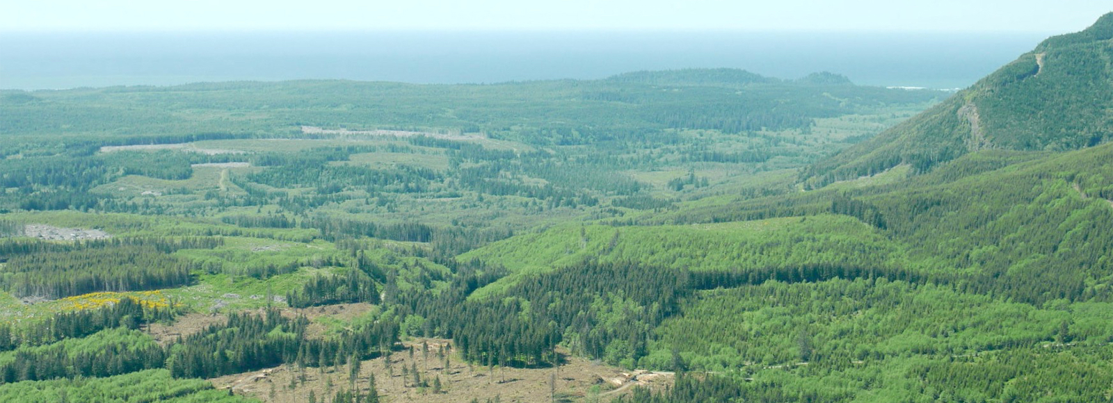 an aerial view of a patchwork of forest