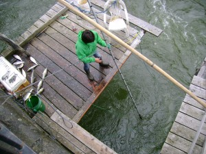 A Native fisher dip-nets from a wooden platform on the Columbia River