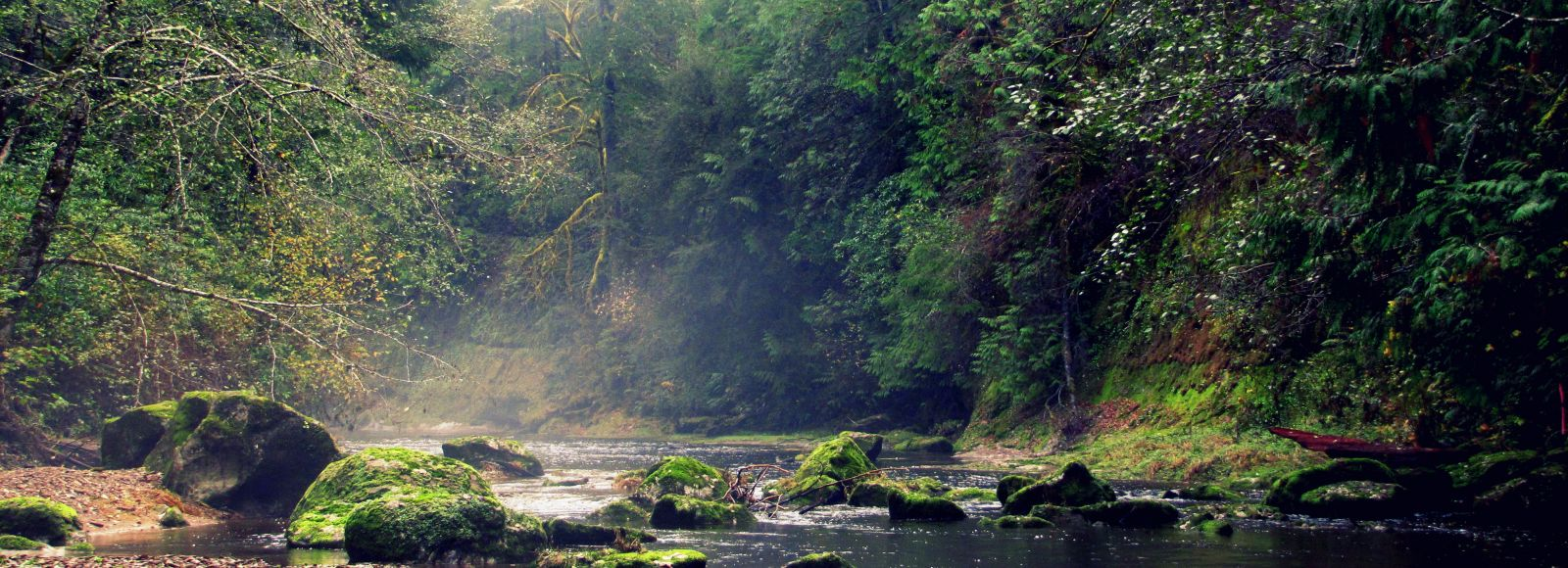 mist rises up off a river running through a lowland coastal forest