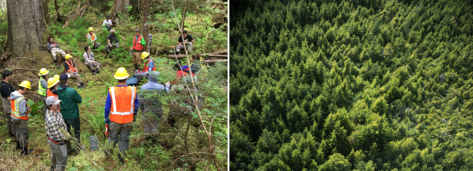 A diptych image. The left side image is a photo showing a crew of a dozen and a half people, some wearing bright orange vests and hard hats, convene in a woodland clearing. The right side is an aerial photograph of a dense forest.