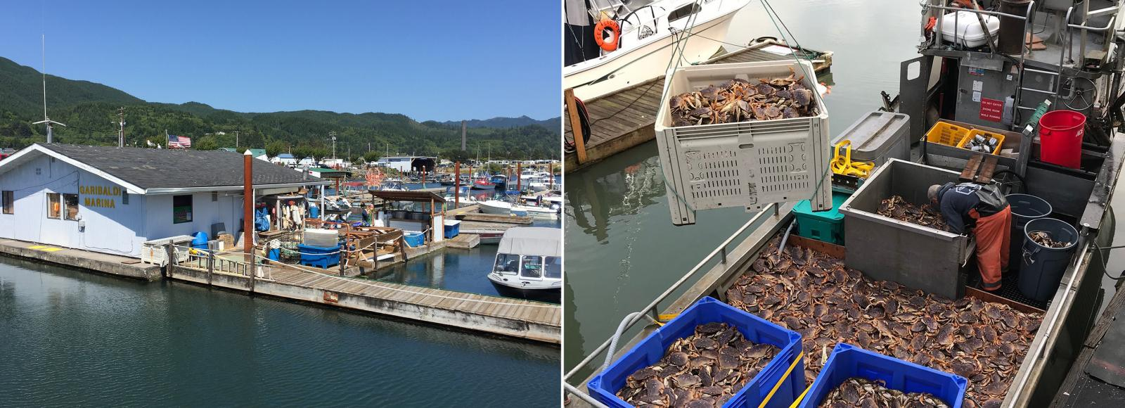 A marina in the left image; a crate of crabs suspended above a boat full of crabs in the right photo.