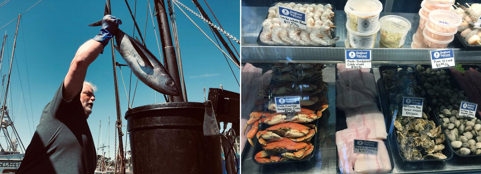 A fisherman loading an albacore into a bucket in the left photo; various types of fresh seafood for sale in a refrigerated case in the right photo
