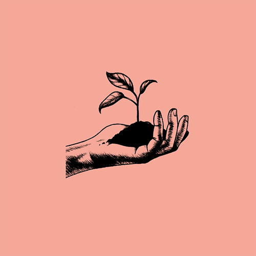pink background, b+w illustration of a hand holding a small pile of soil with a seedling growing out of it