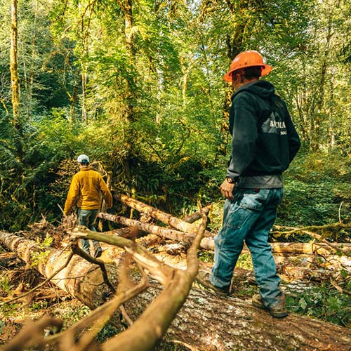 two workers in hardhats walk over logs in a green forest