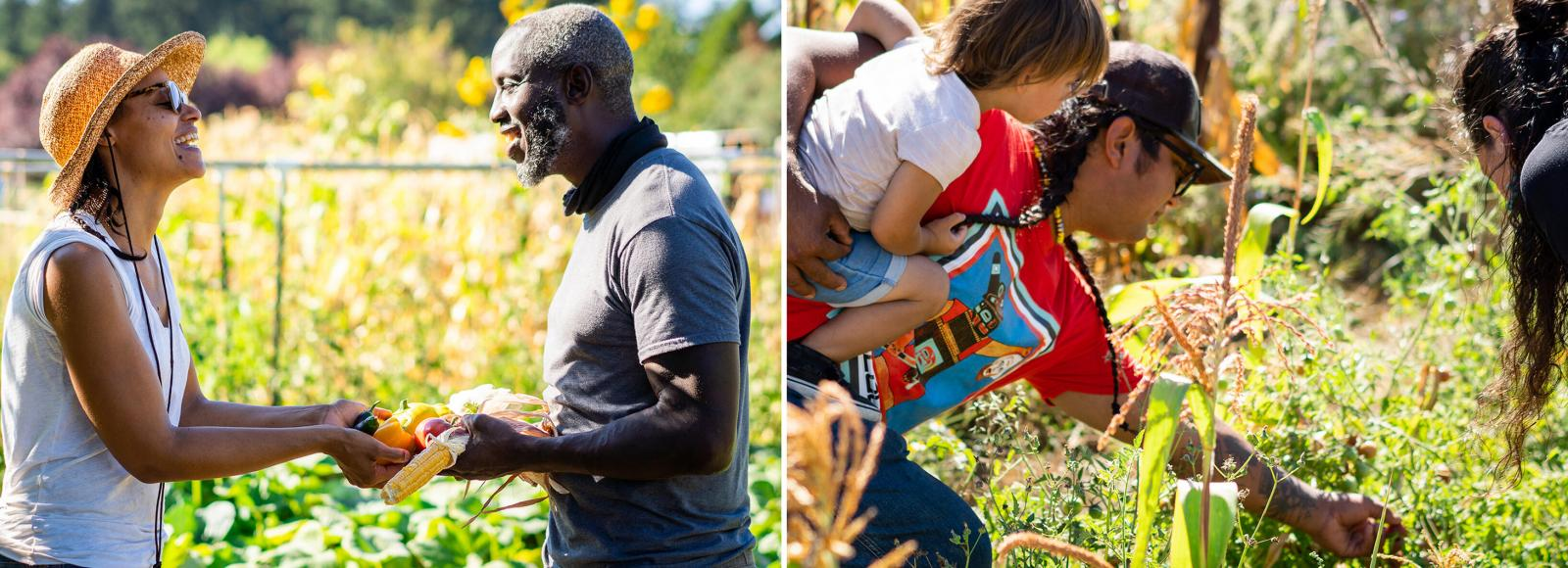 Two side-by-side photos. The left photo shows a woman and a man smiling joyously towards each other, holding vegetables between their extended hands. The right photo shows a man carrying a small child in one arm and picking plant matter with his other arm, while a woman leans in to see what he is picking.